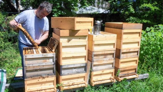 Beim Lehrpfad erfahren auch Schüler alles über die Bienen. (Bild: Winfried Dareb)