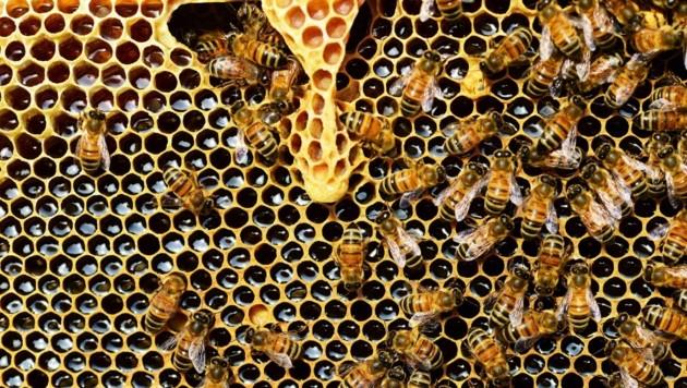 Der Weltbienentag am 20. Mai soll Bewusstsein für den Schutz der wertvollen Insekten schaffen (Bild: Pixabay)