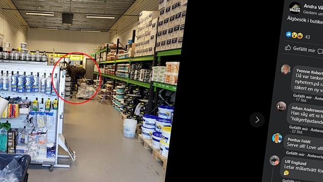 Wie der Elch in das Geschäft gelangte, bleibt unklar. (Bild: Screenshot facebook.com/AndraVagenKalmar, krone.at)