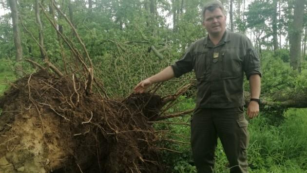 Kommandant Markus Ziegler zeigt einen umgefallenen Baum (Bild: Truppenübungsplatz Bruckneudorf)