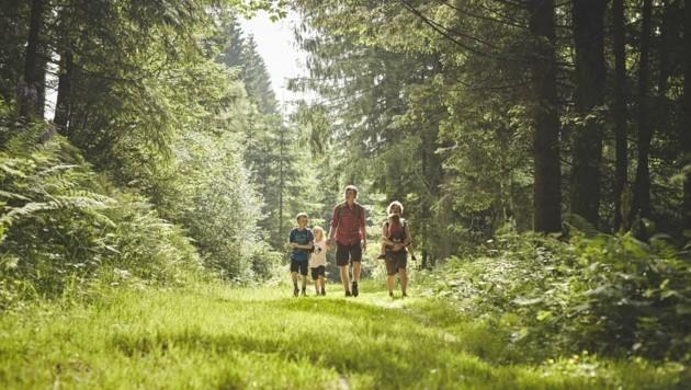 Natur pur: Walderlebnis im südlichen Niederösterreich. (Bild: Wiener Alpen/Florian Lierzer)
