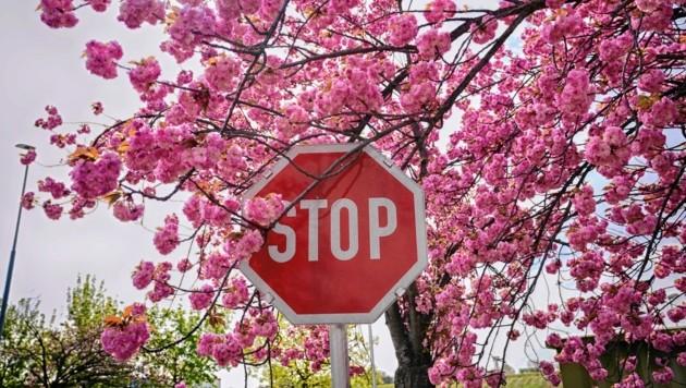 Gefährlich: Auch Stoptafeln schraubte der Dieb ab. (Symbolfoto) (Bild: Pail Sepp)
