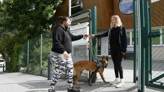 Wer sein Tier dem Tierheim übergibt, muss jetzt zahlen (Symbolbild) (Bild: Birbaumer Christof)