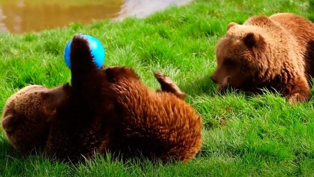 (Bild: youtube.com/ZSL - Zoological Society of London)