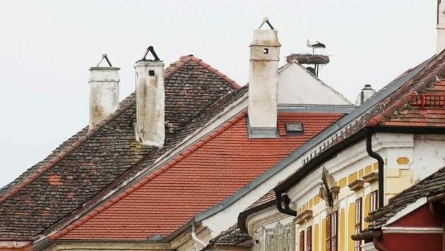 Storchenpaare brüten auf den Dächern der Freistadt Rust. (Bild: Reinhard Judt)