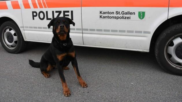Die sechsjährige Rottweiler-Hündin Yodi von Amtsbach biss den mutmaßlichen Autodieb ins Bein. (Bild: Kapo St. Gallen)
