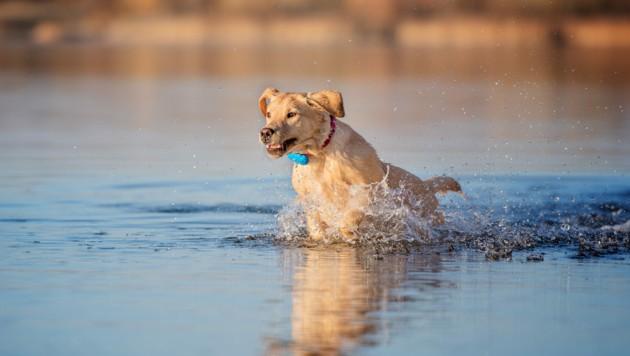 Der Weltmarktführer von GPS-Tracker für Haustiere geht nach der Finanzierungsrunde in den USA voll auf Kundenfang. (Bild: Tractive)