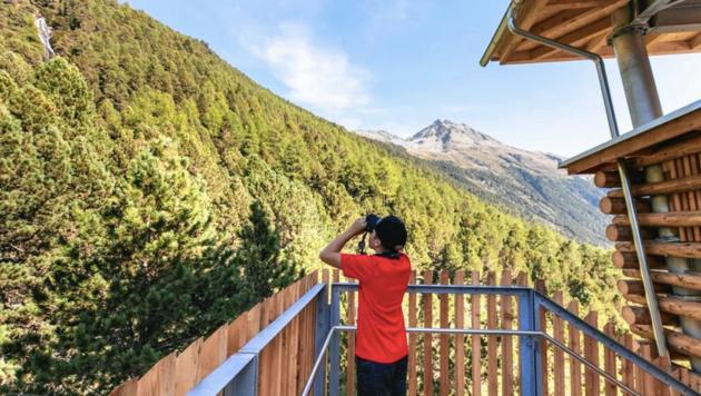 Vom neuen Wildtierbeobachtungsturm Oberhaus aus kann man die Wildtiere beobachten. (Bild: NPHT Ramona Walde)