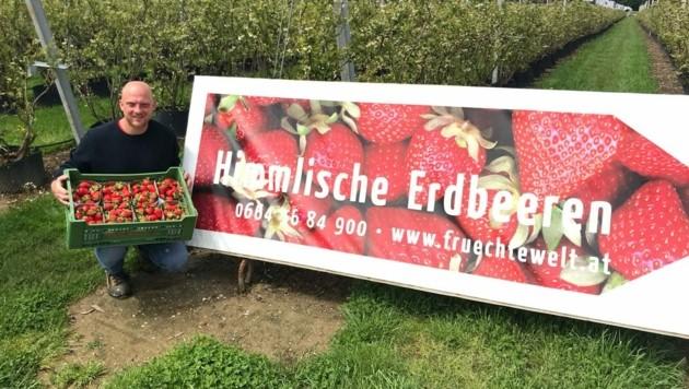 In der Ebenthaler Früchtewelt gibt´s bereits Erdbeeren (Bild: zVg/Matschnig)