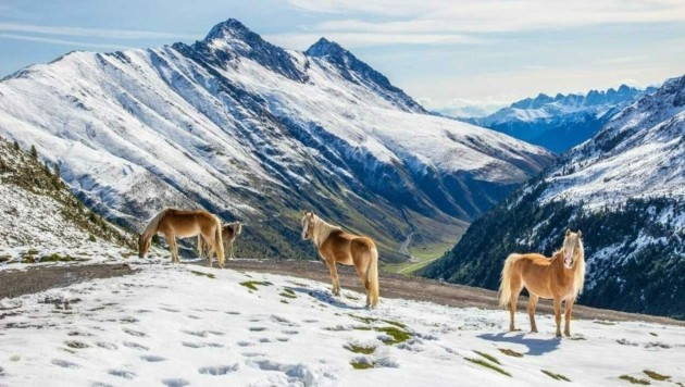 Die Pferde, die bald ins Kühtai kommen, werden sich an den Spätherbst erinnert fühlen. (Bild: Lukas Ruetz)