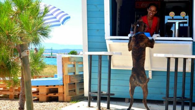 Hundestrand Podvorska (Bild: Crikvenica Tourist Board)