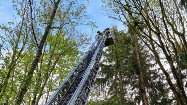 (Bild: Feuerwehr Guttaring )