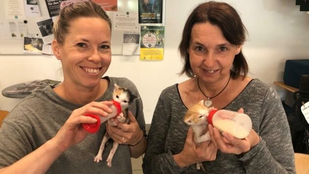 Die Babys werden von Angela Hundlinger und Gabriele Karch versorgt. (Bild: Tierheim Krems)