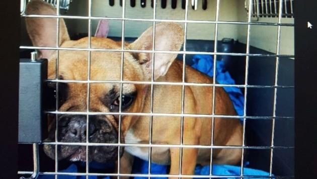 Nach über 24 Stunden Fahrt waren die beschlagnahmten jungen Hunde erschöpft. (Bild: Schulter Christian)