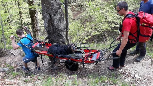 Ungewöhnlicher Einsatz: Bergretter aus Bad Goisern transportierten die Hündin ins Tal. (Bild: Bergrettung Bad Goisern)