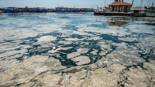 Ein Algenschleim-Teppich an der Küste von Istanbul (Bild: APA/AFP/Yasin Akgul)