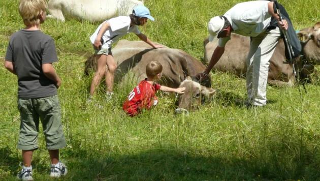 Diese Wanderer machen es falsch: Kontakt zum Weidevieh sollte vermieden werden, auch Füttern ist verboten! (Bild: ©Andrea Huntemann - stock.adobe.com)