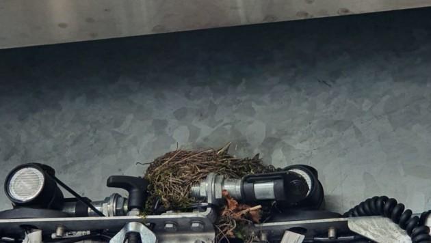 Das Nest auf dem Schutzblech. (Bild: zVg)