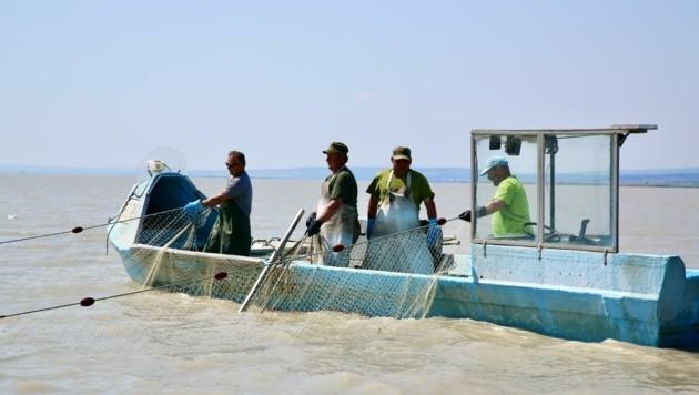 Der See führt wenig Wasser. Anders als Urlauber hoffen die Fischer auf Regen. (Bild: Grammer Karl)