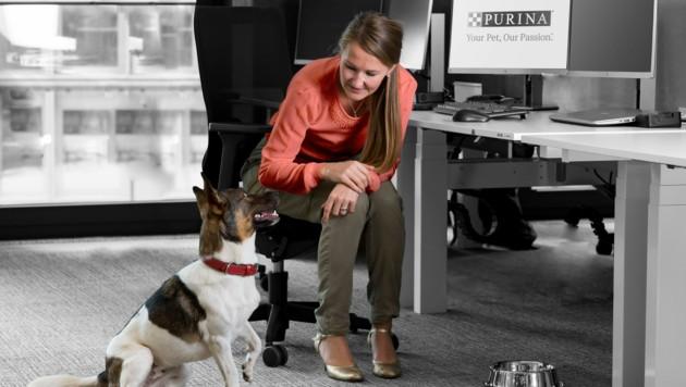Zusammen mit dem Haustier am Arbeitsplatz - positiv für Beide! (Bild: Purina )