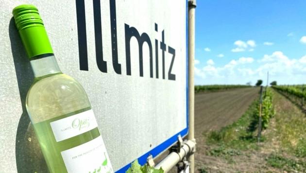 """Der """"Gänsemarsch"""" aus Illmitz. (Bild: Familie Opitz)"""
