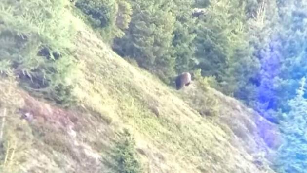 Am 14. Juni wurde im Gemeindegebiet von Fiss ein Bär aufgenommen. (Bild: Privat)