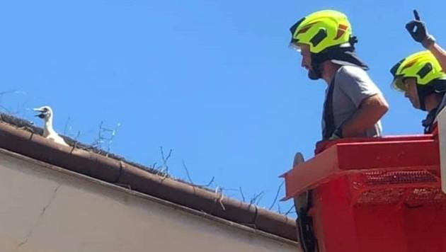 Ein Storch saß nach seinem Sturz aus dem Nest in der Dachrinne fest. (Bild: FF Bad Tatzmannsdorf)