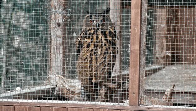 Der Mann hielt auch zwei Käuze in einem Käfig (Symbolbild). (Bild: Hannes Wallner)