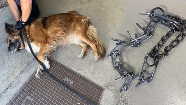 Das Tier war nach Stunden im heißen Pkw völlig erschöpft. (Bild: APA/LPD WIEN)