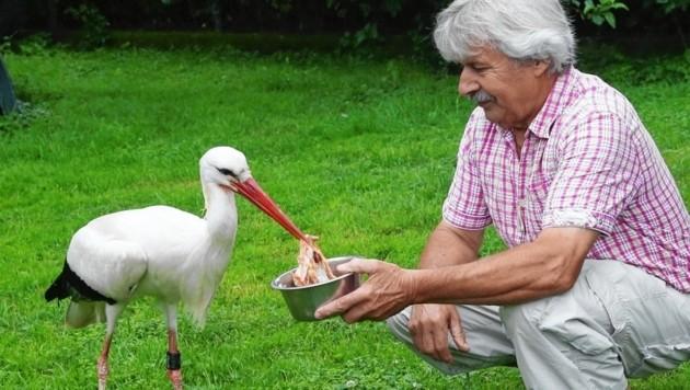 Helmut Rosenthaler kümmert sich aufopfernd um seine Schützlinge. (Bild: Radspieler)