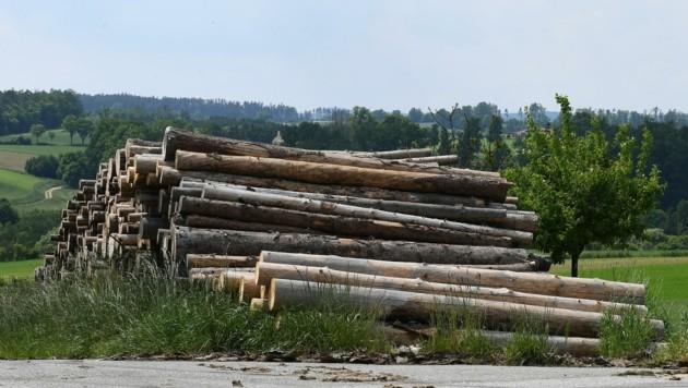 Kritik: Viel zu lange hätte es keine ansprechenden Holzpreise gegeben. (Bild: Huber Patrick)