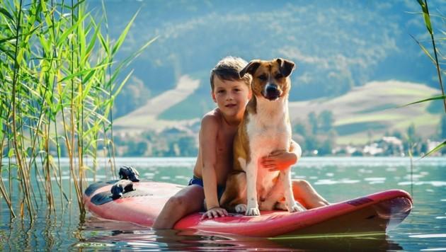Nicht überall können Hundebesitzer mit ihren Vierbeinern baden gehen... (Bild: Markus Wenzel)