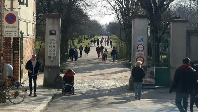Die Steinhofgründe im 16. Bezirk (Archivbild) (Bild: APA/PETJA MLADENOVA)