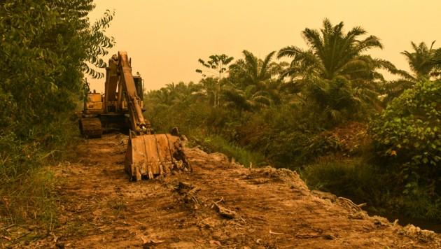 Ein Bagger gräbt auf der Insel Sumatra für eine Palmölplantage Torfböden um. (Bild: Muhammad Adimaja/Greenpeace)