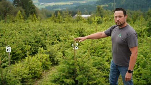 Der Hagel zerstörte die gesamte Christbaumzucht vom Forsthof Eder. Am Foto: Max Eder (Bild: Wenzel Markus)