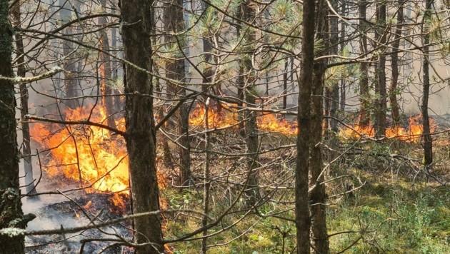 Der Brand breitete sich vom Unterholz auf die Baumwipfel aus. (Bild: Einsatzdoku.at)