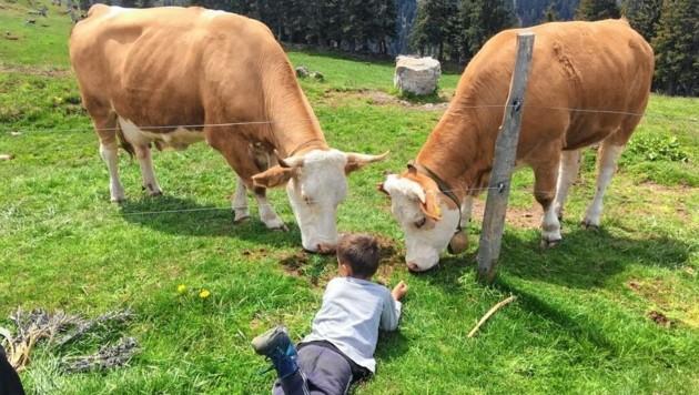 Trügerische Idylle für Werbezwecke: Manche Rinder kennen gar keine freie Natur. (Bild: Christoph Buchacher)