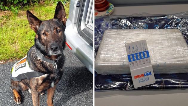 """Diensthund """"Crack"""" erschnüffelte die Drogen. (Bild: BMF)"""