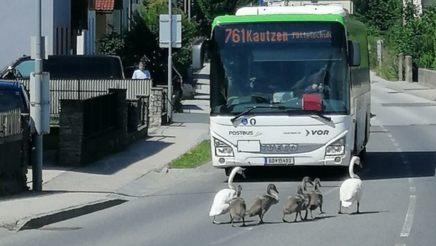 Brenzlige Situationen in Waidhofen an der Thaya blieben zum Glück ohne Unfall. (Bild: Verena Friedrich)