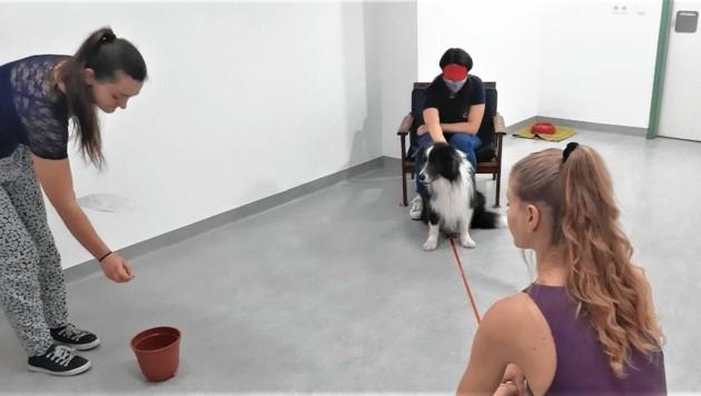 """Hunde entpuppten sich in der Studie als wahre """"Futter""""-Gedankenleser. (Bild: Vetmeduni Vienna)"""
