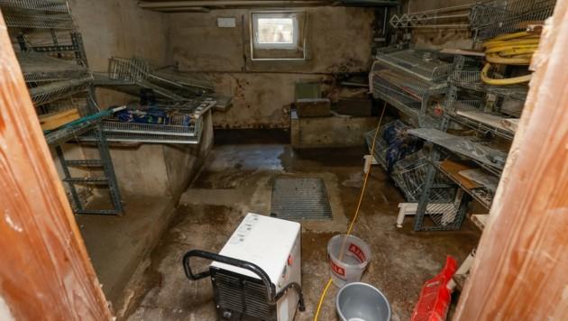 Schon zum dritten Mal stand der Keller von Paula Breit (88) am Flößerweg in Hallein unter Wasser. Die Flut reichte bis zur Kellerdecke – heil blieb nur die Marmelade. (Bild: Tschepp Markus)