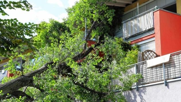 Im Innenhof eines Seniorenheims schlug der Blitz in einen Baum ein, der auf das Gebäude krachte. (Bild: Christian Jauschowetz)