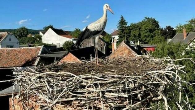 Der Storch wurde wieder in sein Nest gesetzt. (Bild: Feuerwehr Rechnitz)