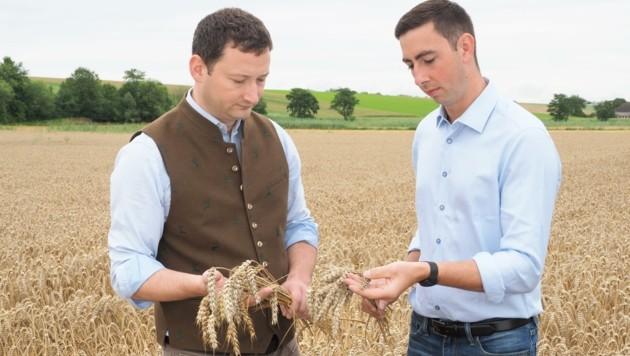 Sorgenvoller Blick über die Felder – EU-Mandatar und Landwirt Bernhuber (re.) sowie Bauernbund-Direktor Paul Nemecek. (Bild: Gabriele Moser)