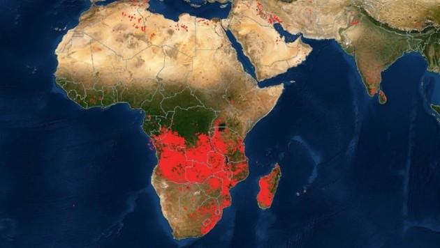 In weiten Teilen Afrikas brennt es - offenbar der am heftigsten betroffene Kontinent. (Bild: NASA)