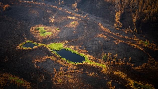 Eine abgebrannte Fläche in der Nähe von Jakutsk. (Bild: AFP)