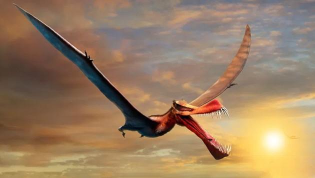 Künstlerische Illustration: So etwa könnte der Flugsaurier namens Thapunngaka shawi ausgesehen haben. (Bild: University of Queensland)