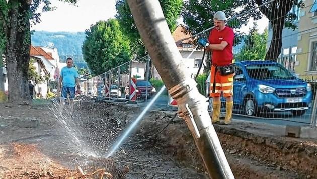 Die Wurzeln der Bäume werden gespült und geschützt (Bild: Facebook/Irene Hochstetter-Lackn)