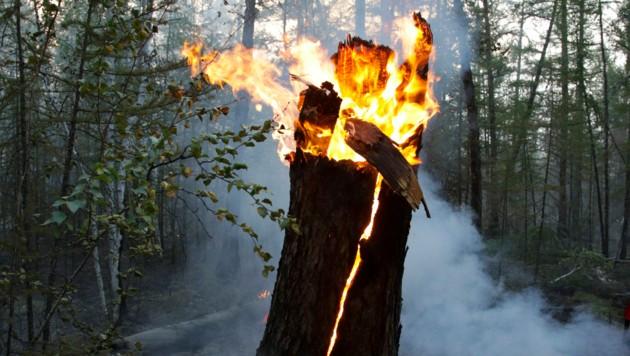Besonders heftig wüten die Waldbrände in der Teilrepublik Sacha weit im Osten Russlands. (Bild: AP)