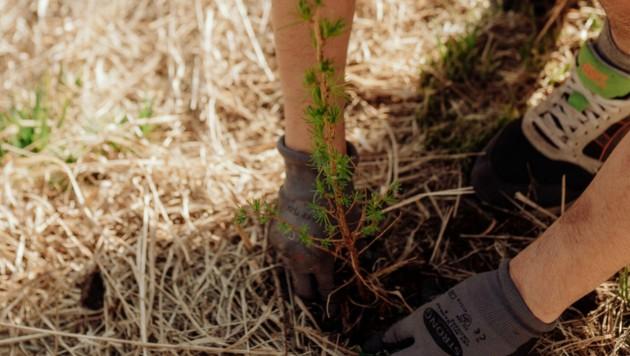 Die Paten können genau sehen, welche Bäume wo gepflanzt wurden. (Bild: Sarah Katharina)